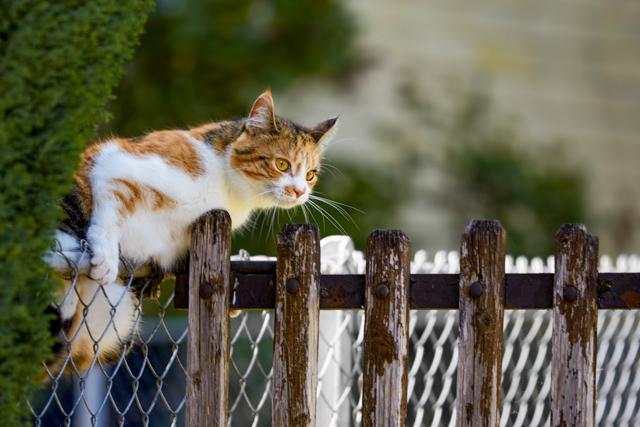 Katze auf dem Zaun