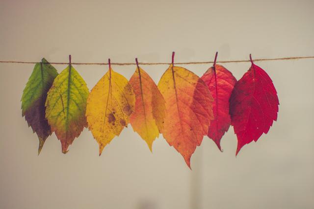 Blätter in unterschiedlicher Färbung